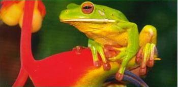 froggie.gif